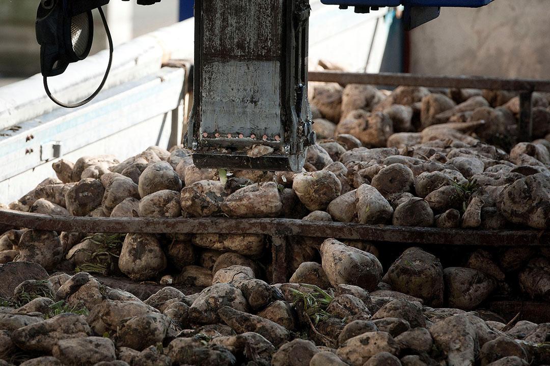 Een lading bieten bij de fabriek. Het voor Südzucker belangrijke suikersegment is nog steeds verliesmakend. Foto: Mark Pasveer