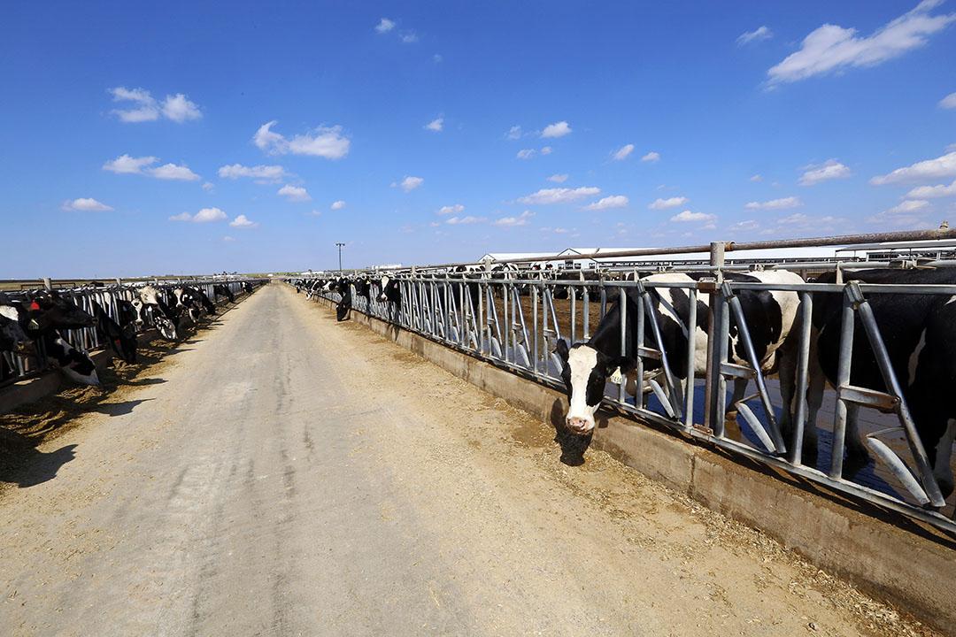 Melkveebedrijf in VS. Foto: Henk Riswick