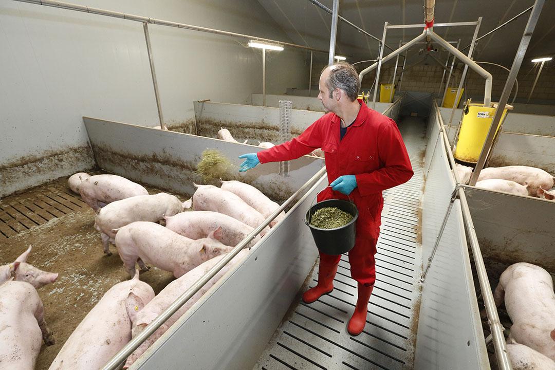 Een HyCare-stal met vleesvarkens. - Foto: Henk Riswick