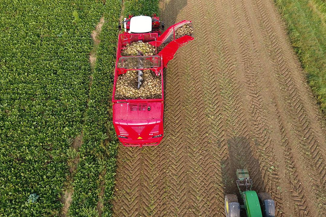 De oogst van suikerbieten in Aerdt (Gld.). - Foto: Henk Riswick