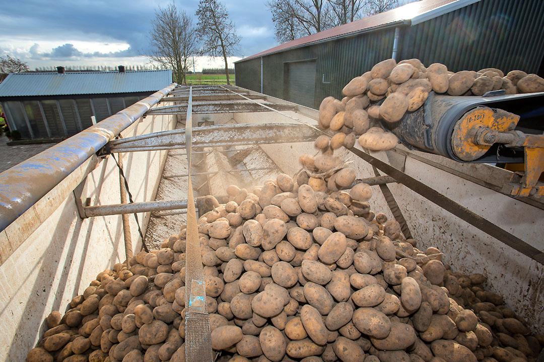 Fritesaardappeltelers met een schade tot €125.000 hebben hun voorlopige aanvragen voor de coronacompensatie definitief kunnen maken. - Foto: Peter Roek