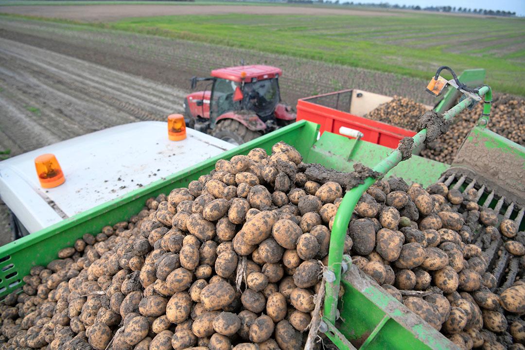 Rooien van pootaardappelen in Nederland. Volgens Jeroen Candel moet Nederland afstappen van het idee om de wereld te moeten voeden, met alsmaar meer productie. Nederland moet inzetten op export van kennis en van hoogwaardige producten, zoals pootgoed. - Foto: Mark Pasveer