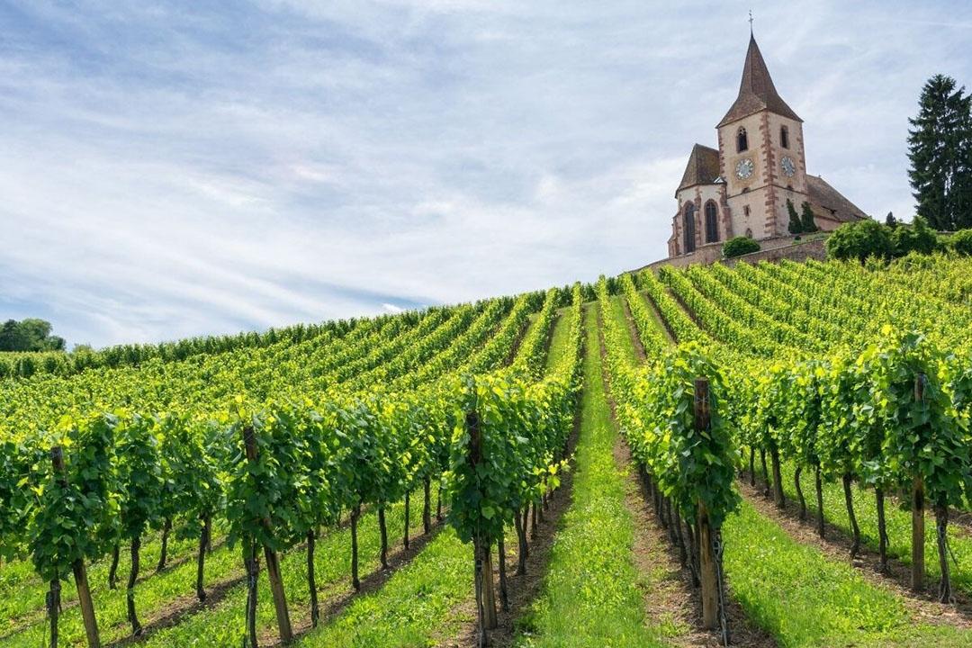 Wijngaard in Frankrijk. Foto: Canva