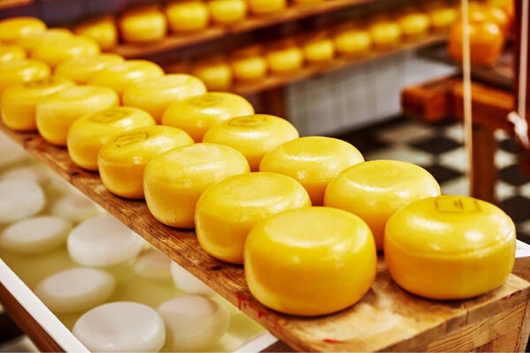 kaasproductie België