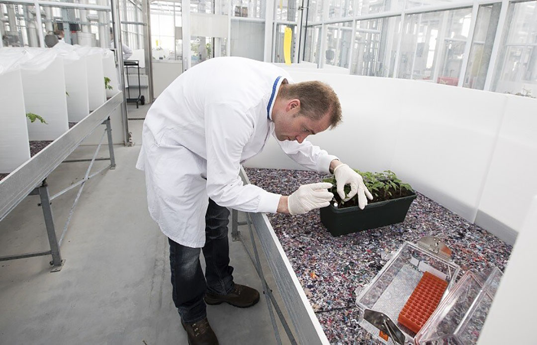 Ralstonia-onderzoek bij laboratorium van NVWA (NRC).  - Foto: NVWA