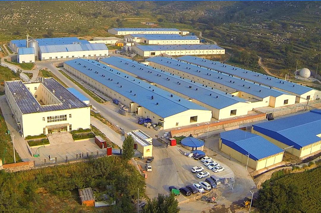 Het varkensfokbedrijf van Nucléus in China. Foto: Nucléus
