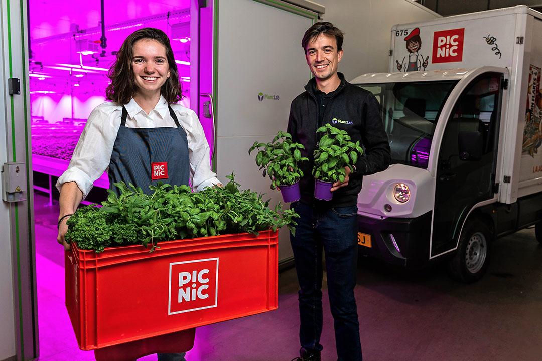 Online supermarkt Picnic start een pilot met de verse groenten en kruiden van indoor farm PlantLab. Foto: Picnic