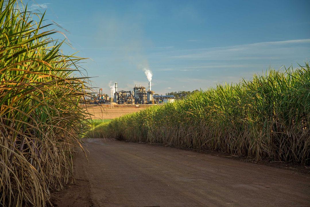 Suikerfabriek tussen de suikerrietplantages in Brazilië. - Foto: Canva/Mailson Pignata