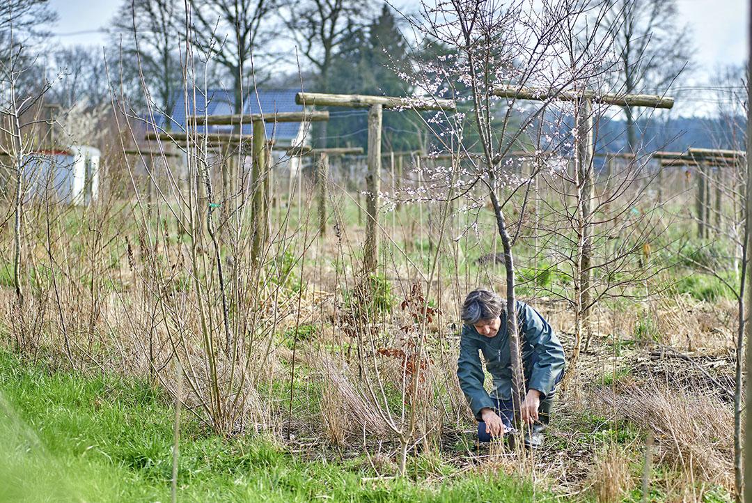 Een voedselbos in het Brabantse Sint Michielsgestel. - Foto: Van Assendelft