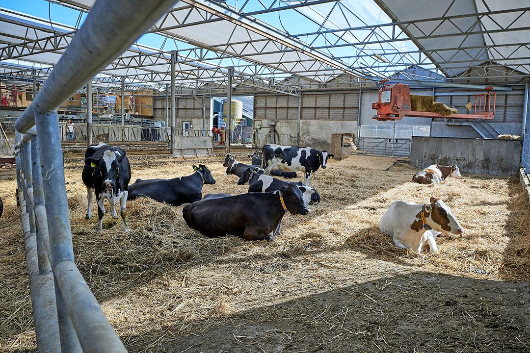 Voorbeeld van een biologische veehouderij. - Foto: Fred Libochant