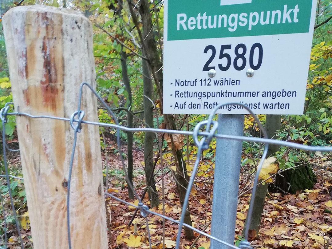 Om de besmette gebieden in Brandenburg wordt een vaste afrastering gezet van schapengaas. Verspreiding van het virus voorkomen is cruciaal.  Foto: MSGIV