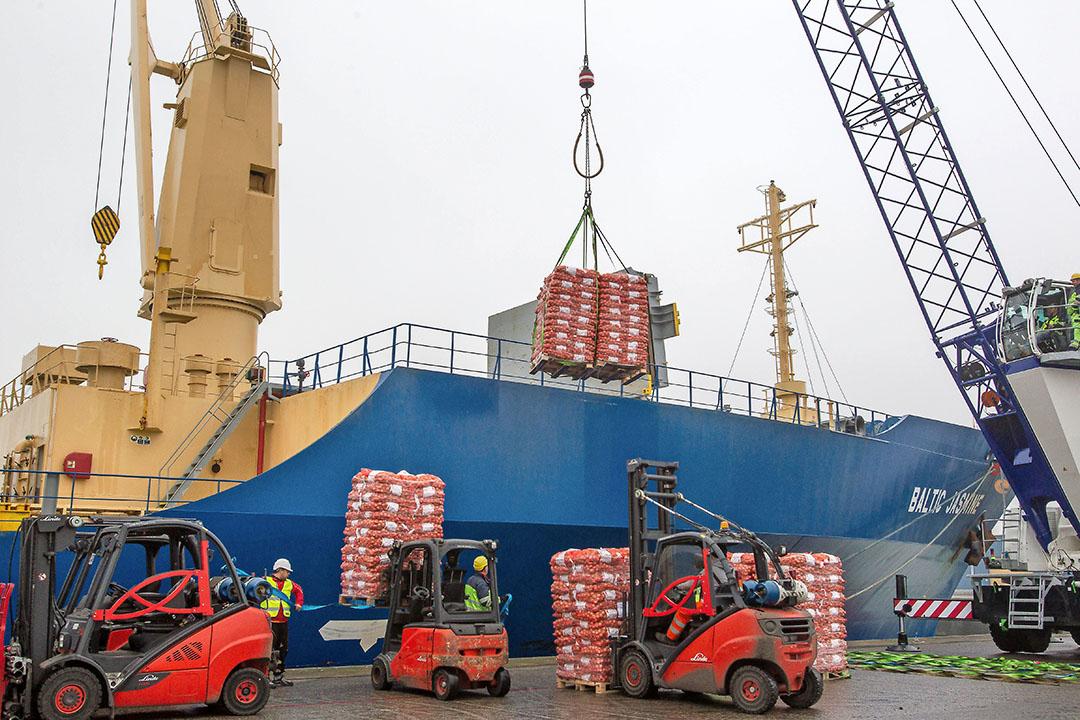 Uien laden op de Baltic Jasmin, een gekoeld vrachtschip, voor verscheping naar Senegal. - Foto: Peter Roek