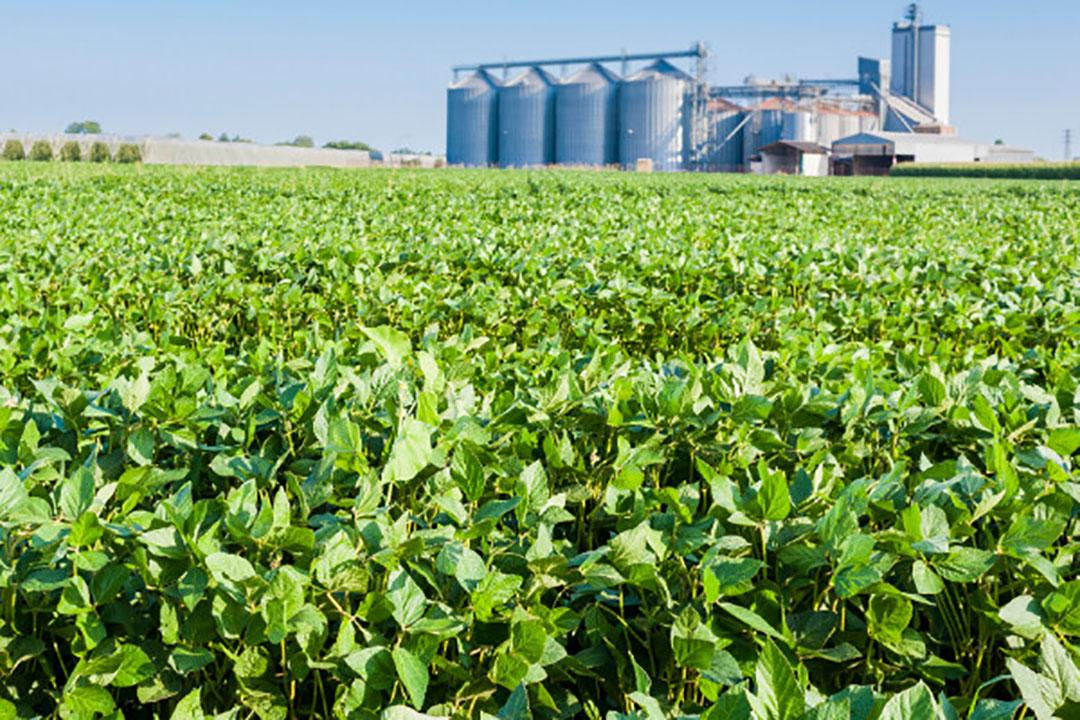 Braziliaans perceel met sojabonen. - Foto: Canva