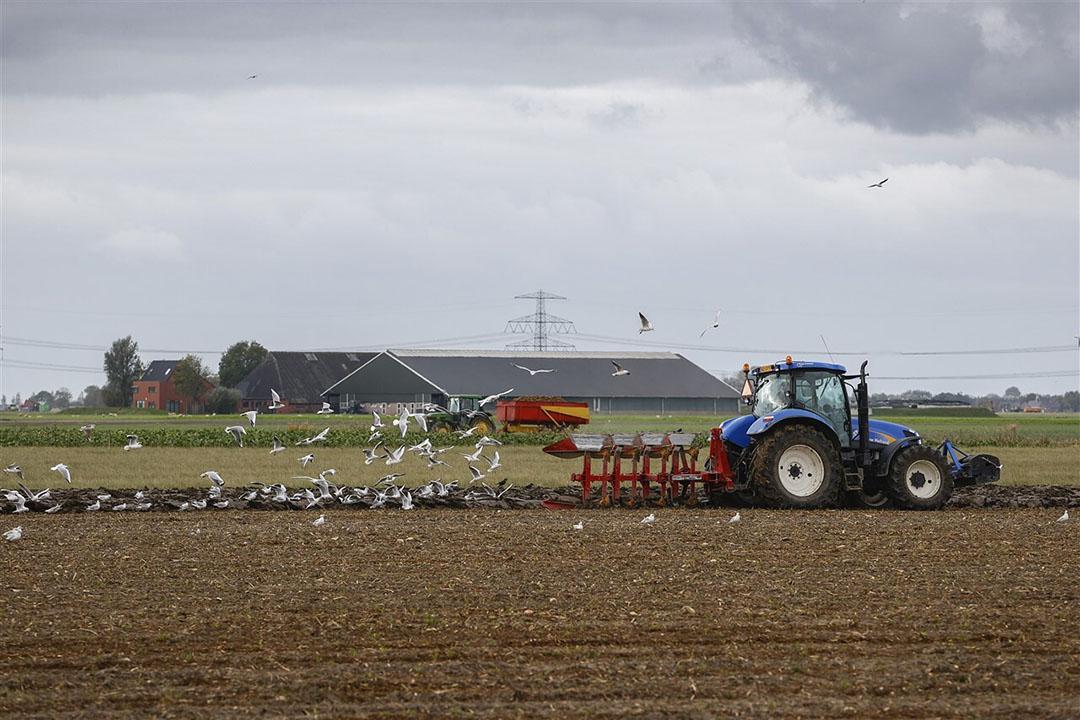 Een akkerbouwer ploegt zijn land nabij het Groningse Spijk. - Foto: ANP