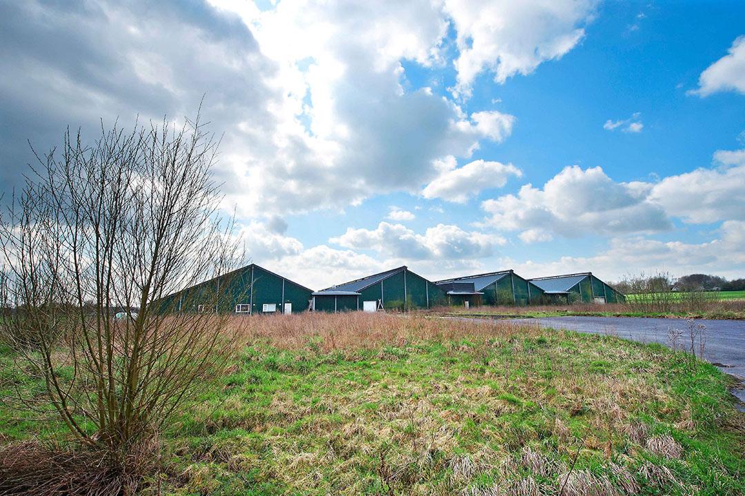 Het voormalige pluimveebedrijf in Groesbeek, waar Kees Koolen een zuivelfabriek wil beginnen. - Foto: Bert Beelen/ANP