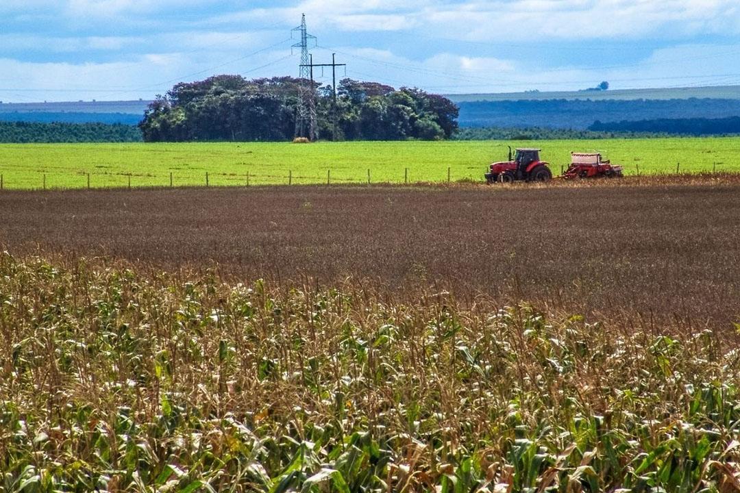 Soja is het belangrijkste exportproduct en voor 2020 verwacht de vereniging van graanexporteurs (Anec) een Braziliaanse export van 84 miljoen ton. Foto: Canva