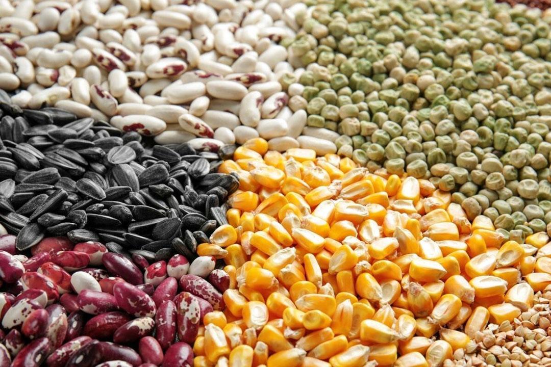 De graanprijzen stegen minder hard dan in voorgaande maanden, maar zitten inmiddels op een niveau van ruim 114 punten, dat is 20% meer dan een jaar geleden. Foto: Canva