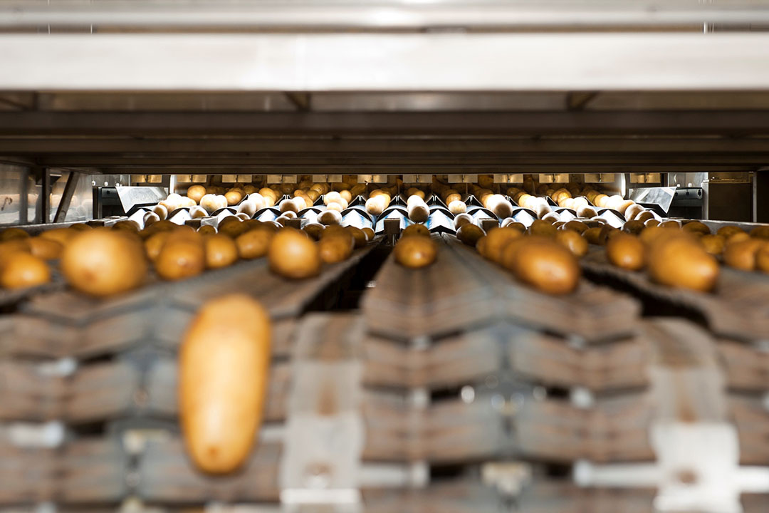 Archiefbeeld van het inpakken van tafelaardappelen. Aardappelen op de transportband. - Foto Wick Natzijl