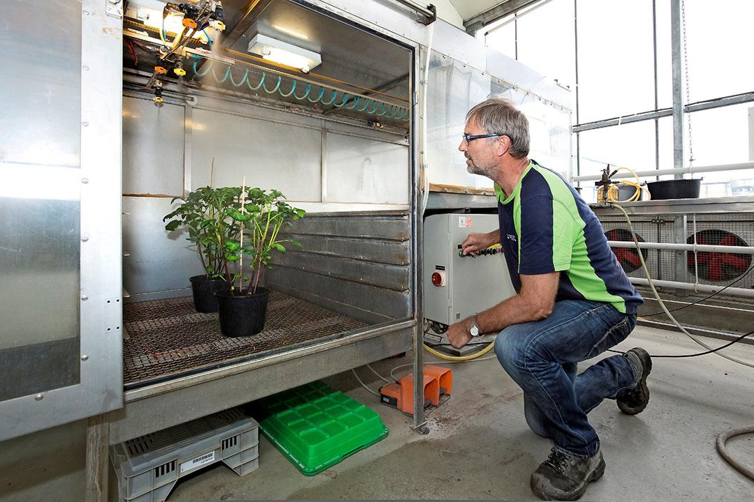 Een onderzoeker bekijkt de reactie van een plant op een spuitmiddel. - Foto: Ruud Ploeg