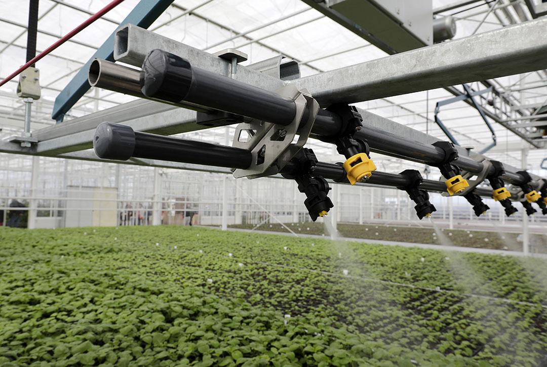 Kweekkas voor aardappelen bij Agrico Research in Bant (Fl.). - Foto: Ruud Ploeg