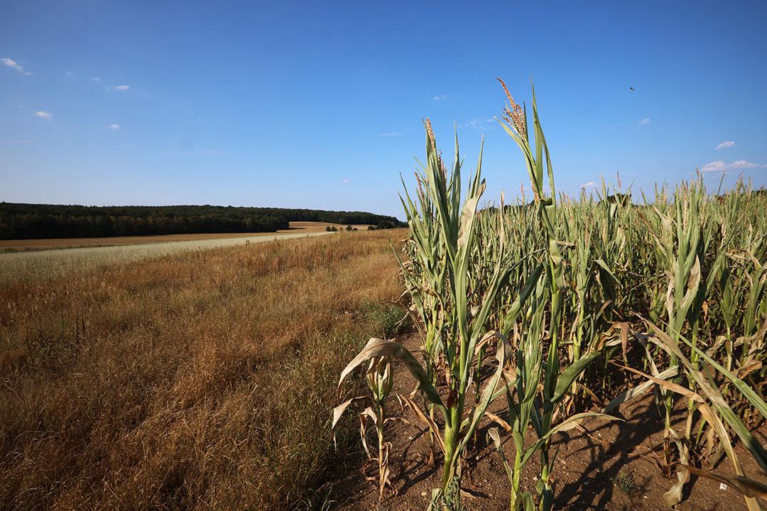 Droogte zoals hier in de Achterhoek heeft een negatief effect op de nitraatgehaltes in uitspoelingswater van landbouwpercelen.