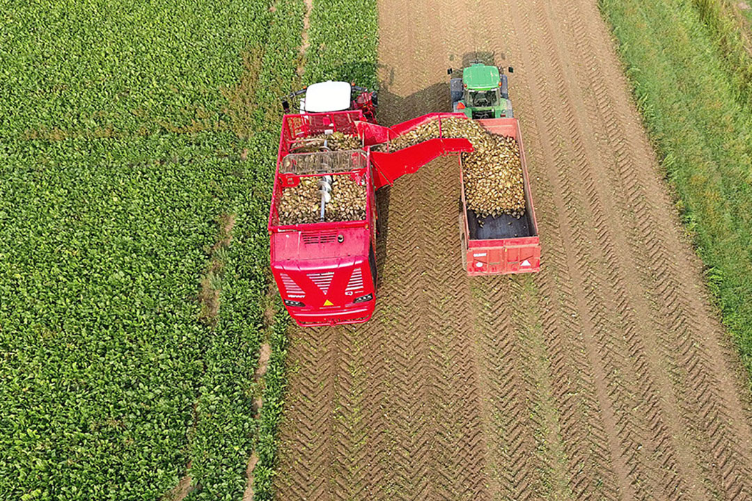 Inzetten op de teelt van suikerbieten biedt kansen voor de productie van biomassa, aldus Dorette Corbey. - Foto: Henk Riswick