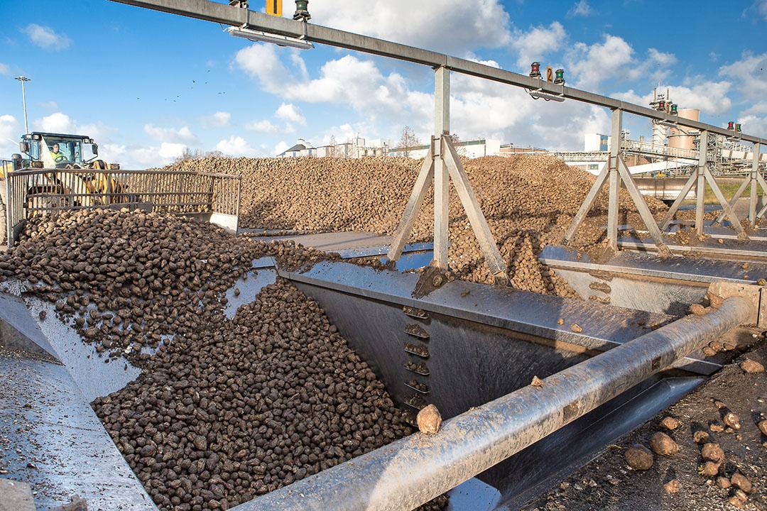 Suikerbieten worden de put ingeschoven voor verwerking in de fabriek. Foto: Peter Roek