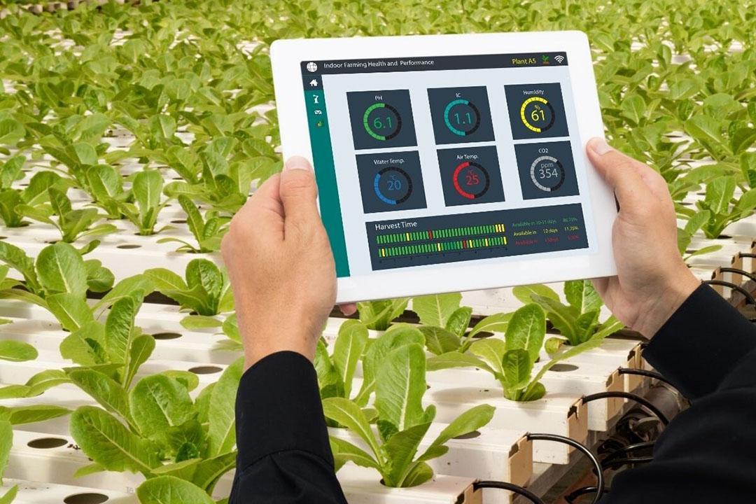 In de agrarische sector groeide het aantal octrooien in 4IR technologie van 48 in 2010 tot 384 in 2018. Het gaat dan om octrooien op het gebied van bijvoorbeeld smart farming of automatisering in kassen. Foto: Canva