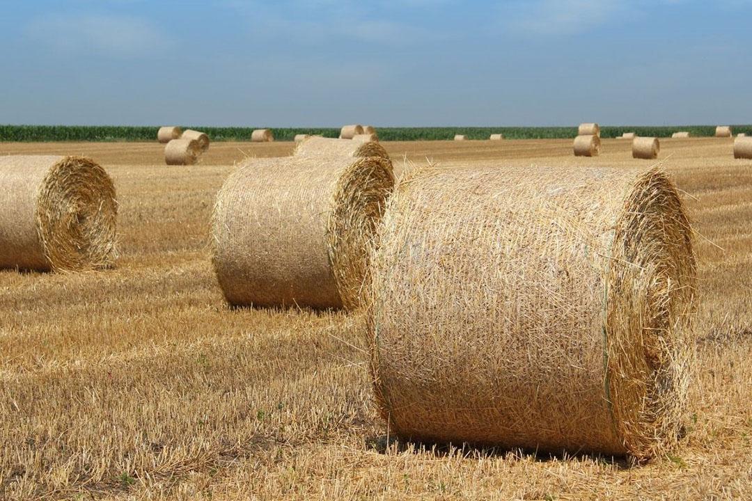 De vraag naar stro loopt redelijk door. Het is afwachten hoeveel er nog in voorraad zit bij Franse stroboeren. Foto: Canva