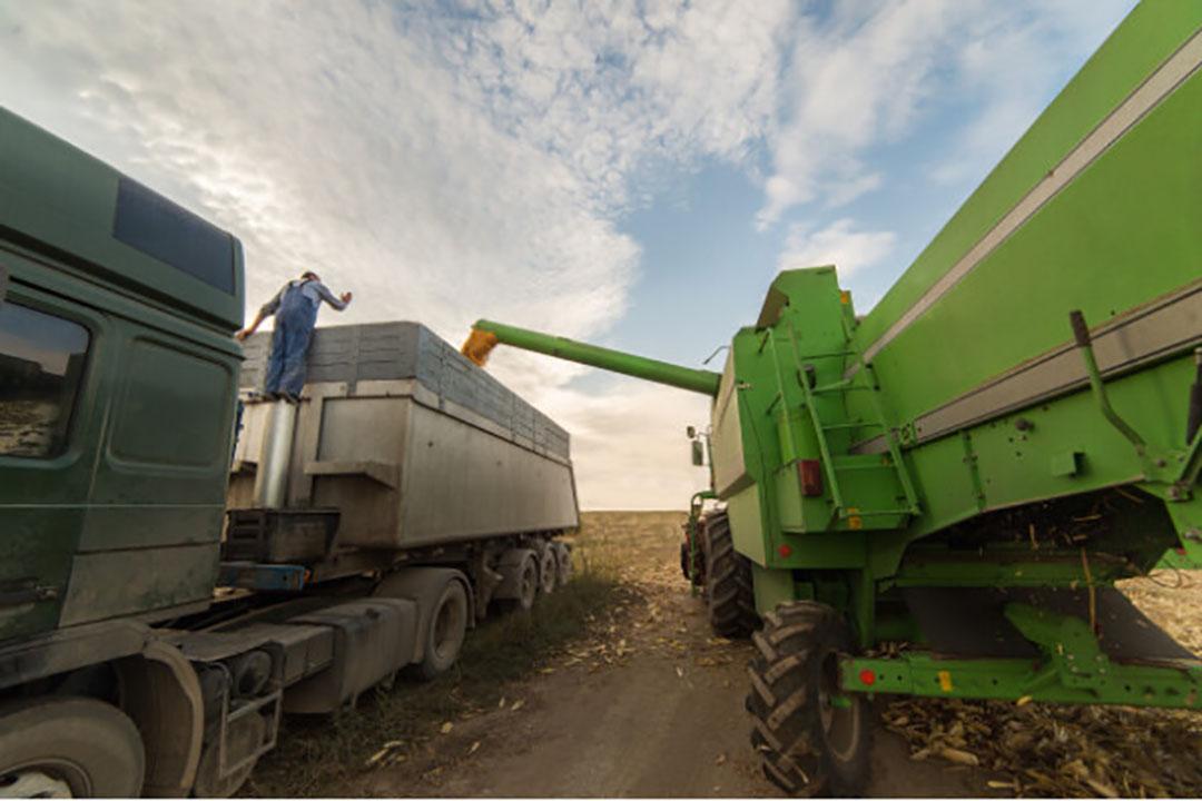 De graanproductie daalt onder andere door lagere maisproducties in de Verenigde Staten. - Foto: Canva
