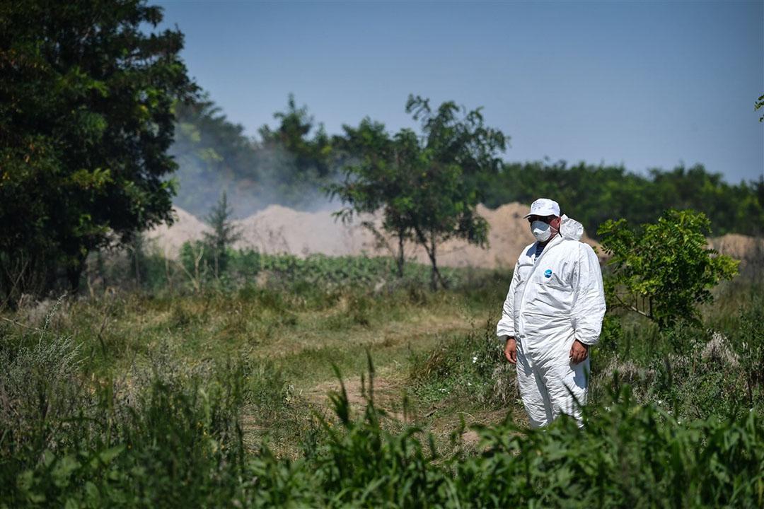 Roemenië kampt al enige met uitbraken van Afrikaanse varkenspest. Maatregelen om de ziekte te bestrijden, zijn nog weinig succesvol. - Foto: ANP