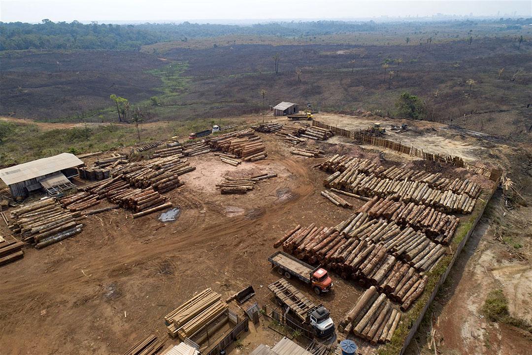 Boomstammen worden gestapeld in een houtzagerij omringd door recent verkoolde en ontboste velden nabij Porto Velho, in de staat Rondonia, Brazilië. - Foto: ANP
