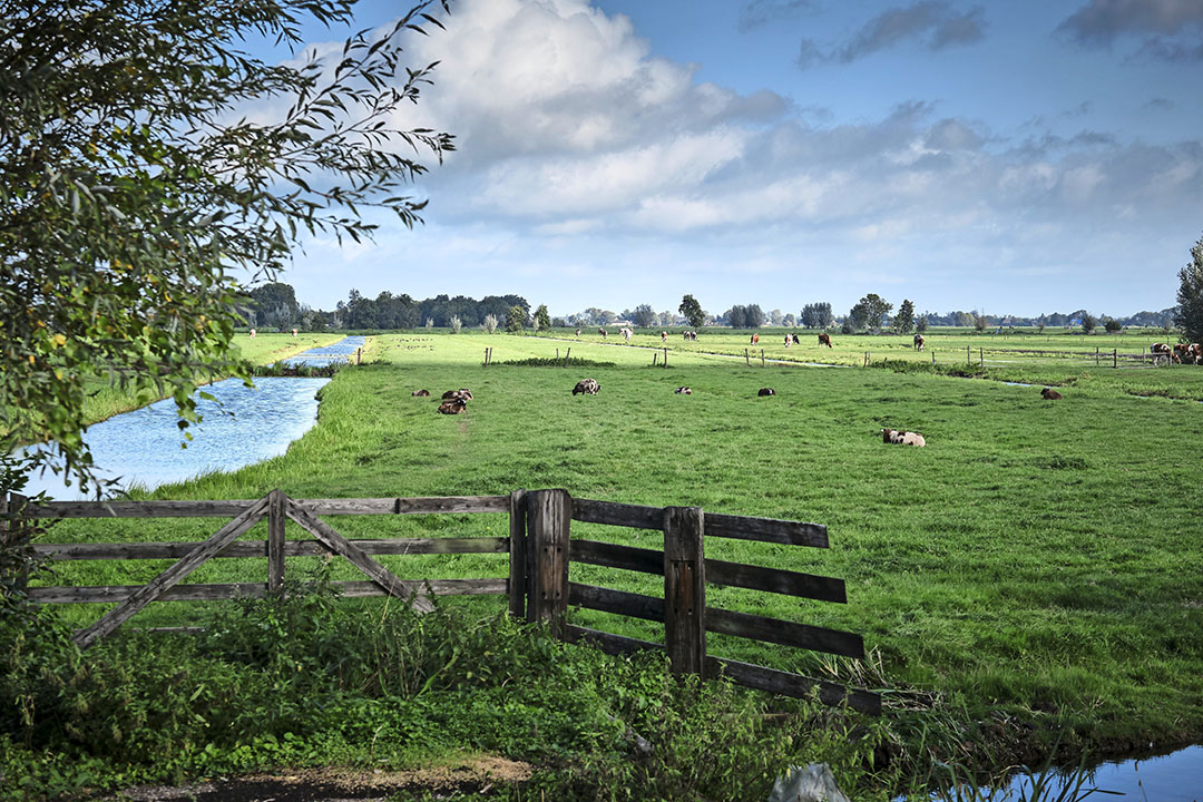 Boeren kunnen deelnemen aan ecoregelingen om hun inkomenssteun aan te vullen. Dat kan bijvoorbeeld door in veenweidegebieden (op de foto Krimpenerwaard) te werken aan projecten die gericht zijn op vermindering van uitstoot van broeikasgassen. - Foto: Fred Libochant