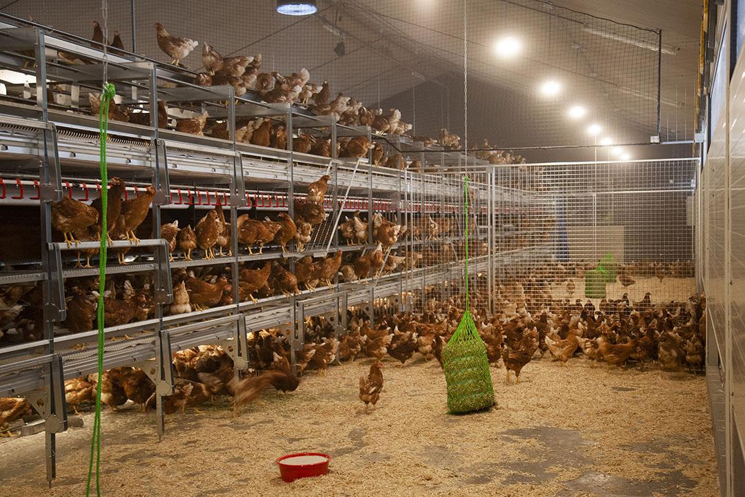 Het Duitse welzijnskeurmerk Initiative Tierwohl is vergelijkbaar met het Beter Leven-keurmerk. - Foto: Hans Banus