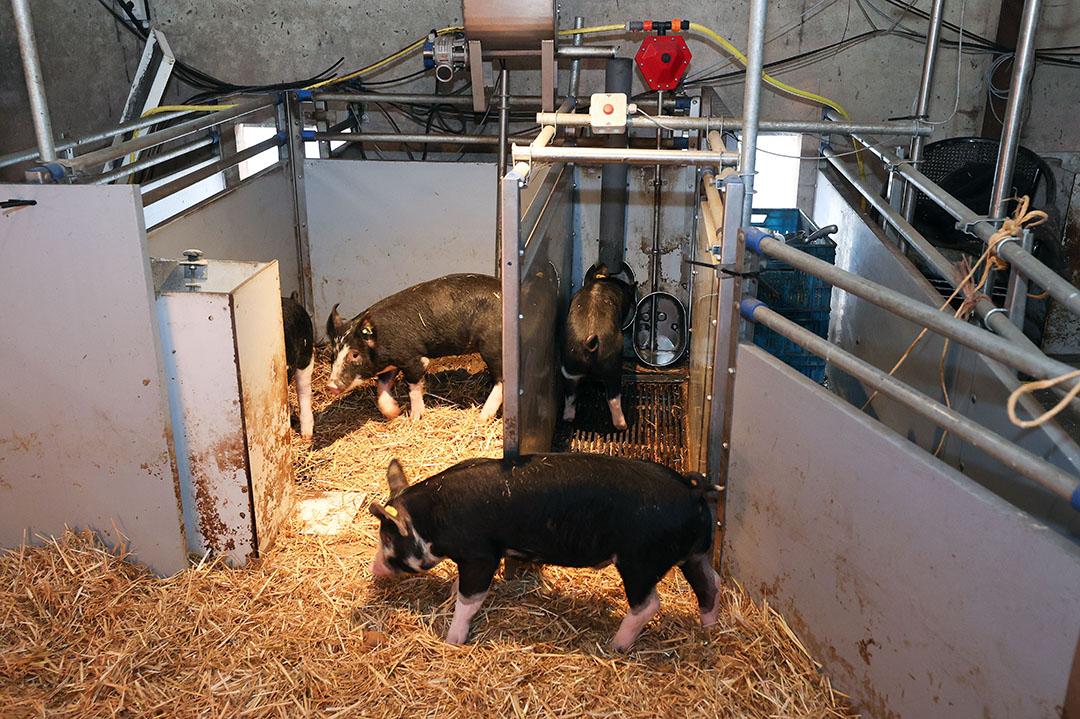 Het varkenstoilet van Kees Scheepens. Rechts het plas- en links het poepgedeelte. - Foto: Bert Jansen