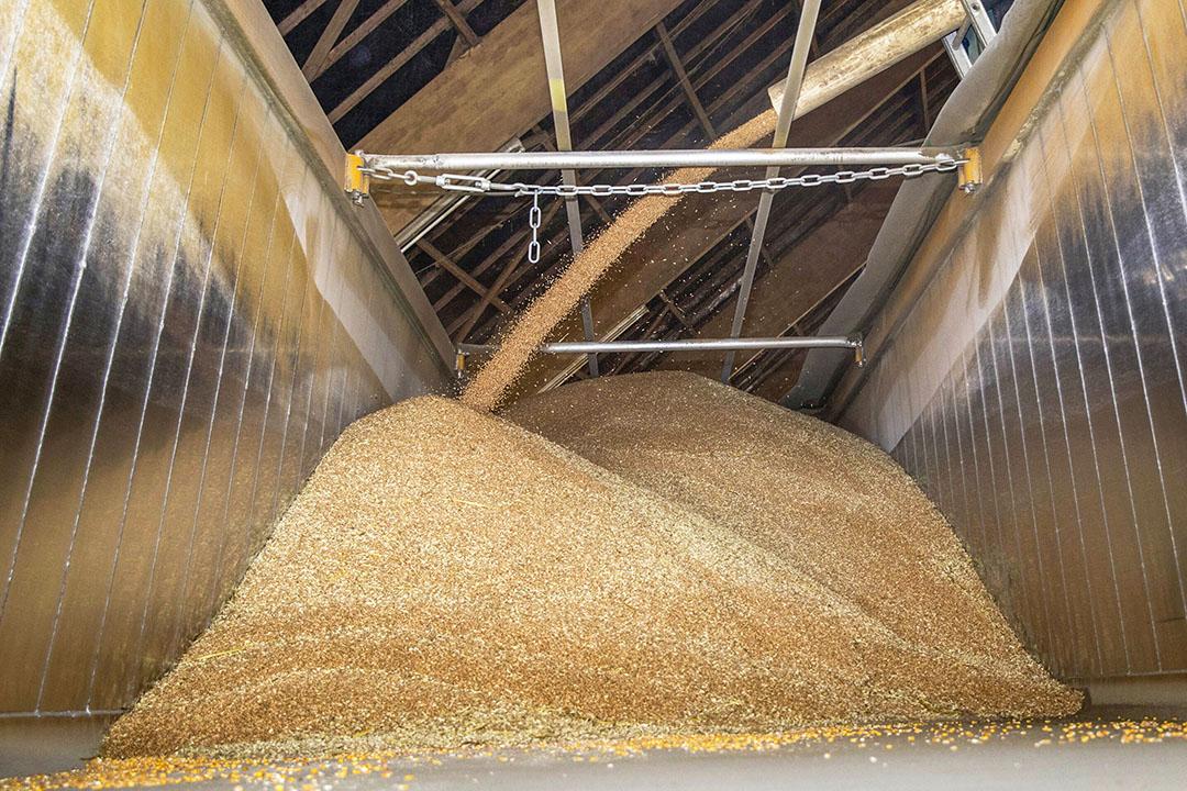 Lossen van graan - Foto: Koos van der Spek