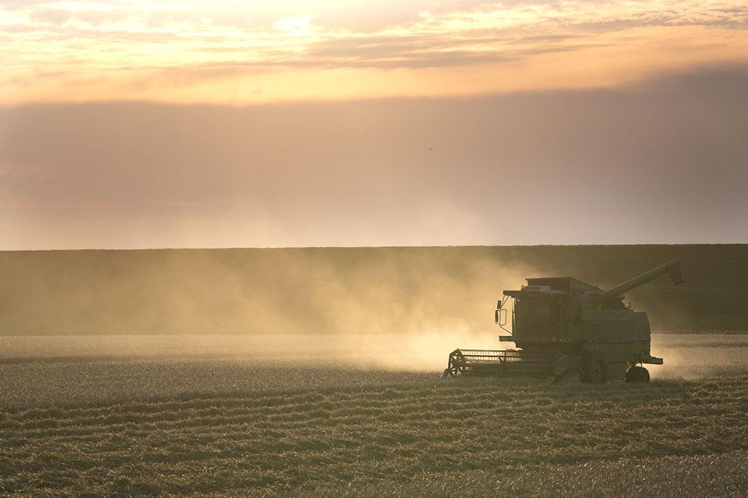 Oogst van gerst. Het blijkt dat gerst sterk zout-tolerant is, terwijl aardappelen matig zout-tolerant zijn. Foto: Mark Pasveer