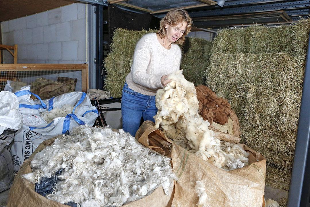 Schapenhoudster Reina Ovinge in haar schuur, waar drie grote zakken wol staan, gekocht van boeren uit de regio. Op de foto links mohair van geiten, in de middelste zit schapenwol, achterin staat een zak met bruine alpaca wol.