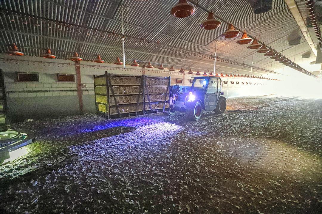 Voor het laden en transport van vleeskuikens onder koude omstandigheden in Vlaanderen is er nu een koudeprotocol. Foto: Bert Jansen