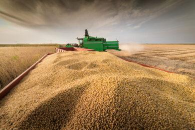 Tot eind januari was 'slechts' 2% van de sojabonen geoogst in de Braziliaanse staat Mato Grosso. - Foto: Canva
