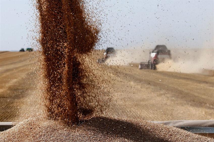 Graanoogst in Rusland. Het land heeft deze week exportheffingen ingesteld op tarwe. - Foto: ANP