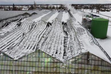 Verschillende tuinders bij Erica en Klazienaveen hebben zwaar te lijden gehad van het winterse weer. Foto: Novum via ANP
