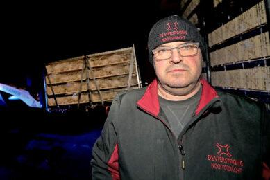 Maandagavond werd bij Tienus Berkepies ook een stal vleeskuikens geladen, de tweede. De kuikens van de zondaglevering gaan woensdagavond naar de slachterij. - Foto: Harry Tielman