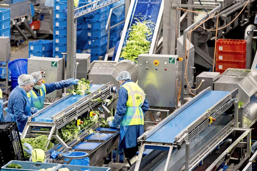 Werkzaamheden bij een leverancier van Albert Heijn.  - Foto: ANP