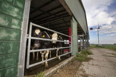 Kleine windmolen op een melkveebedrijf. - Foto: Roel Dijkstra