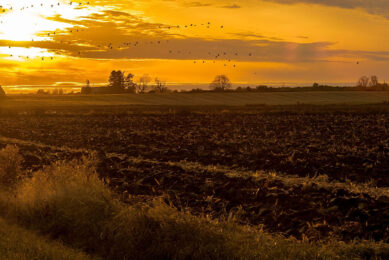 In het vierde kwartaal is in totaal 10.933 hectare landbouwgrond verhandeld in Nederland. - Foto: Canva