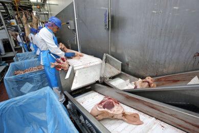 Inpakken van varkensvlees voor export. - Foto: Bert Jansen