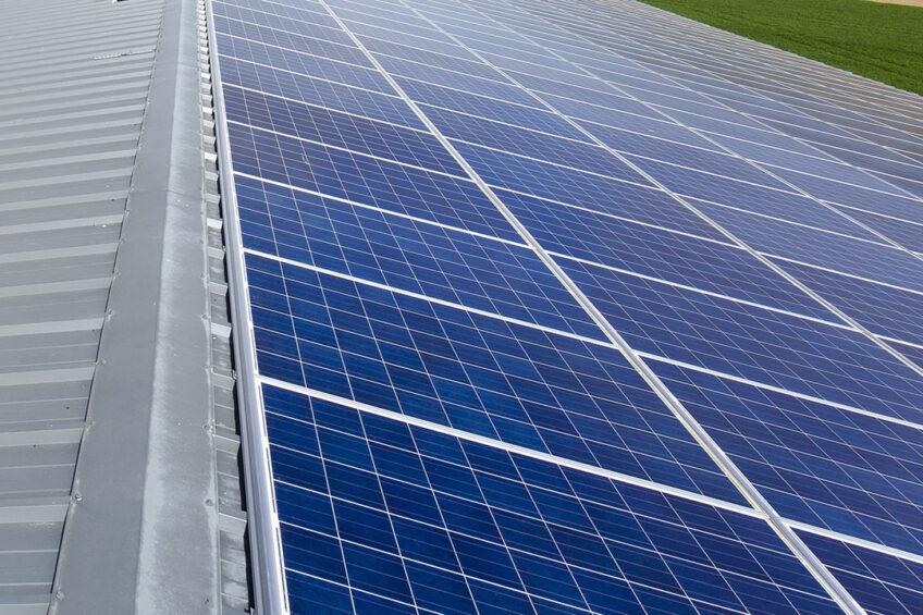 Pork Group gaat investeren in onder meer zonne-energie. - Foto: Ruud Ploeg