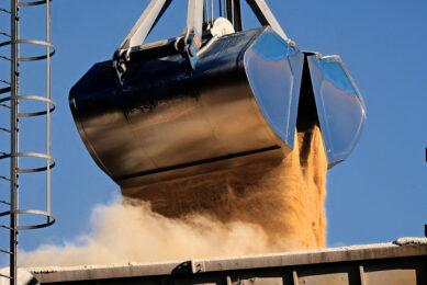 De wereldvoorraad aan soja is laag. Samen met de stijgende olieprijs drijft dat de prijs van soja op. - Foto: Twan Wiermans