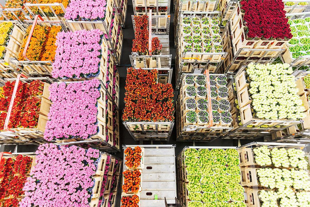 FloraHolland verhandelt jaarlijks voor €4,6 miljard aan bloemen en planten en heeft ongeveer 4.000 leden. - Foto: Canva